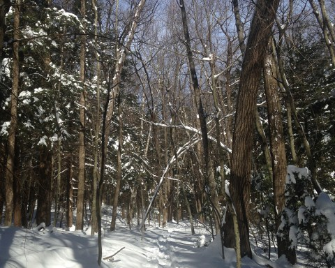 Winter trails on the grounds of the Clark Art Institute are open for the exploring; photo by Sara Farrell Okamura.