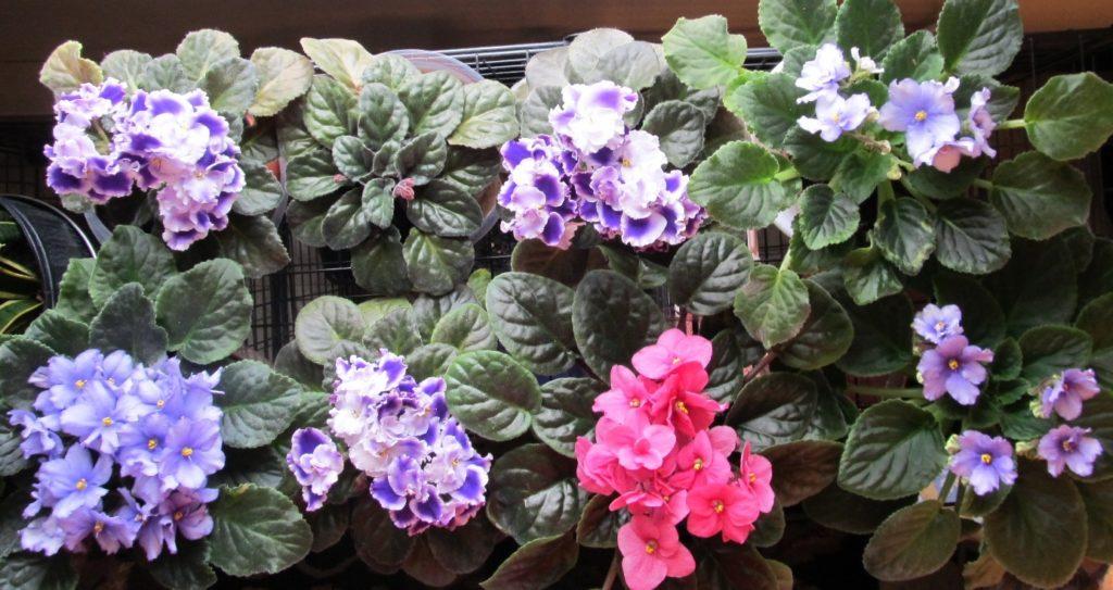 Original eight plants; photo by Sheila Velazquez