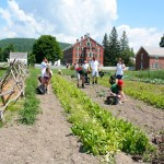 Photo of Hancock Shaker Mill vegetable gardens: The gardens at Hancock Shaker Village are a key educational component of the annual activities on site. Now, visitors can eat their education, both at Seeds cafe and through food awareness workshops; submitted photo.