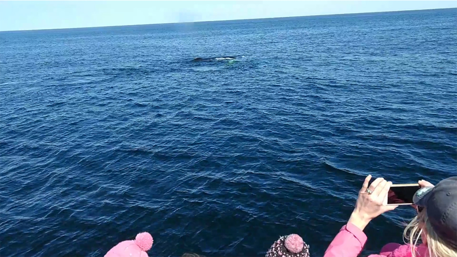 A whale watch in Gloucester is a don't-miss. Here, a humpback dives for a meal; still from video by Floren Garcia.