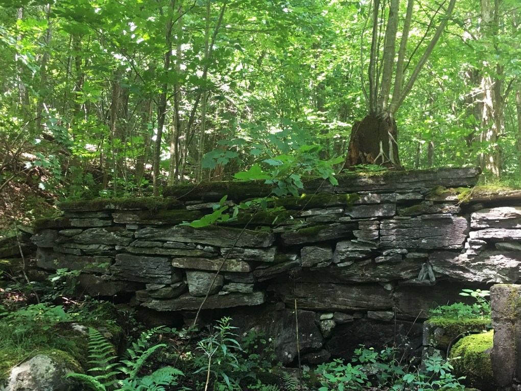 The remnants of precision-engineered Shaker walls add historical context to the serenity of the forest; submitted photo.