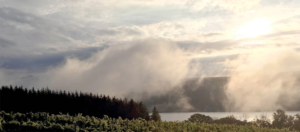 Finger Lakes breezes impart a breath of moisture to the vines at Keuka Lake Vineyards; photo courtesy Keuka Lake Vineyards.