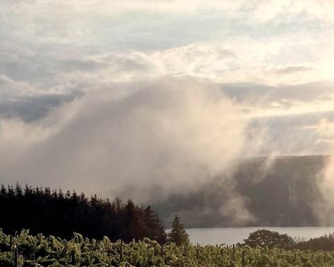 Finger Lakes breezes impart a breath of moisture to the vines at Keuka Lake Vineyards; photo courtesy Keuka Lake Vineyards.