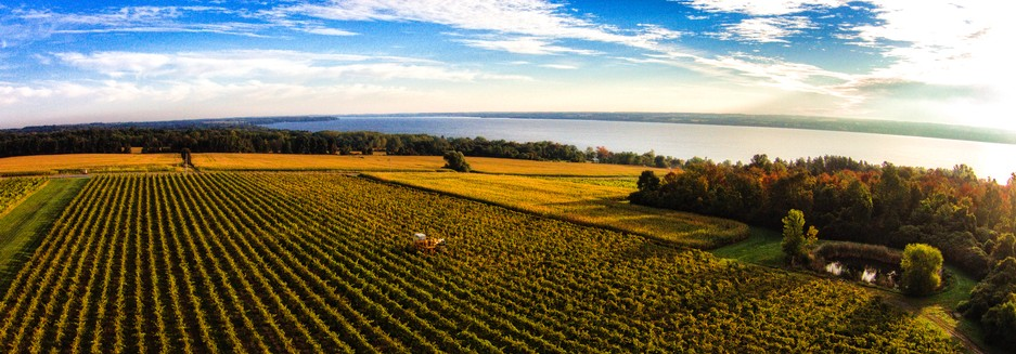 The Finger Lakes region has been one of most beautiful wine country settings in the world; photo courtesy Knapp Vineyard.