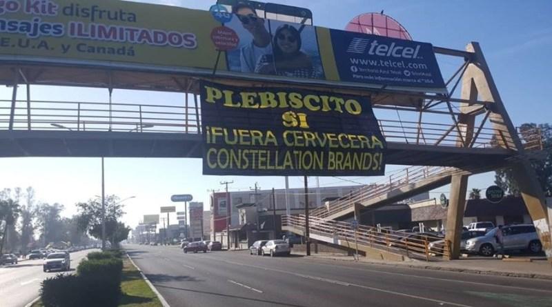 Cumple los  requisitos de ley la solicitud de plebiscito contra Constellation Brands: IEEBC (Baja California)