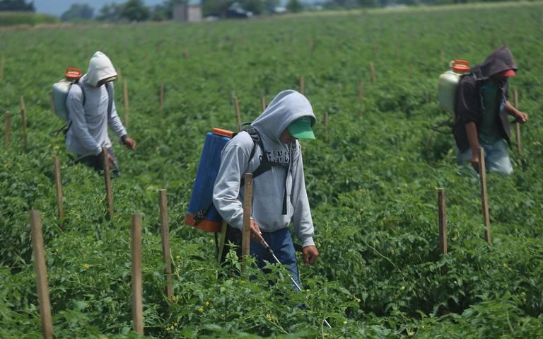 Jornaleros, entre pobreza y explotación (Michoacán)