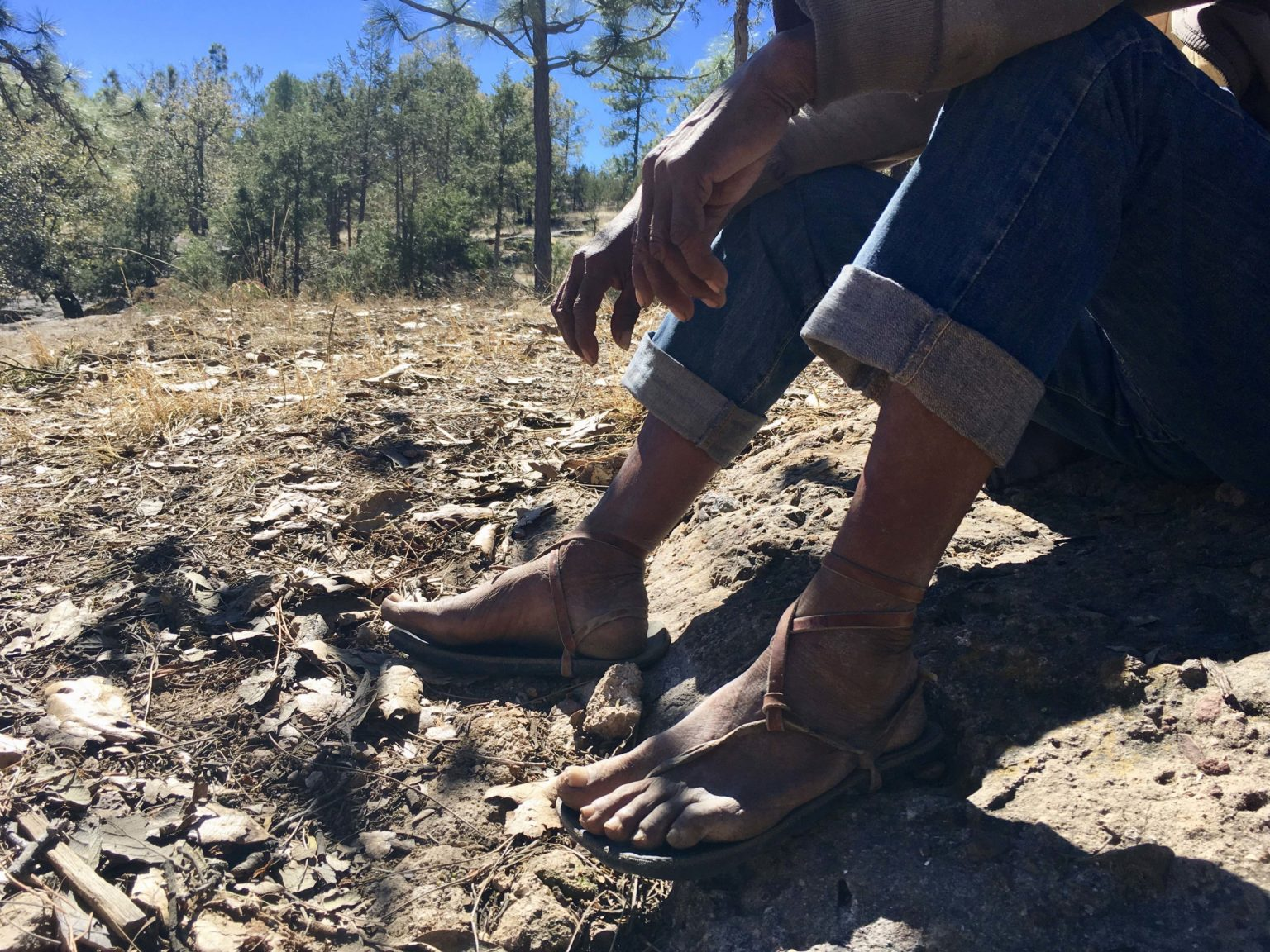 Desplazamiento forzado en la Tarahumara: obligados a dejar su comunidad y su bosque (Chihuahua)