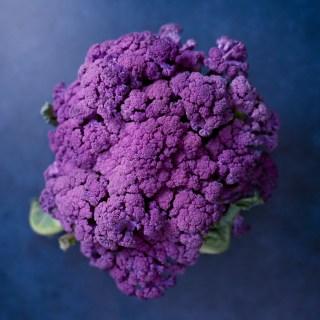 purple cauliflower on blue background