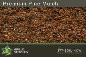 Premium Pine Mulch