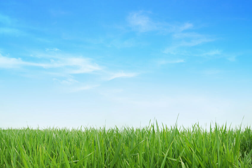 close up of green grass with a blue sky in the background and some clouds