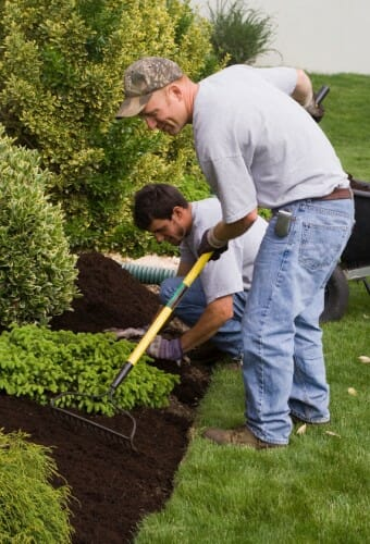 two men spreading mulch around shrubs