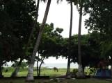 Horse and Palm Trees at Lake Nicaragua