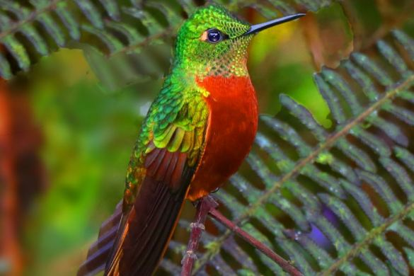 Ecuadorian Nature Reserves Provide Dazzling Bird Displays