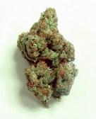 og-kush-marijuana-strain-32