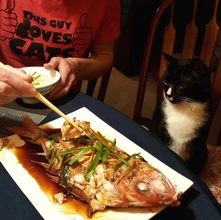 Tycho the cat has a seat at the table for meals. He likes to watch us eat, especially things like fish.