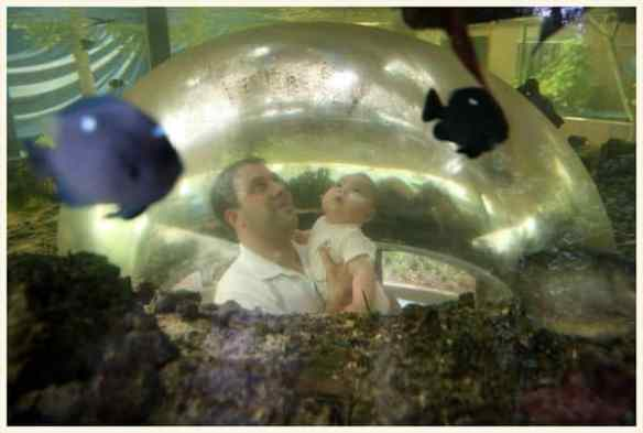 Image result for green connection aquarium kota kinabalu