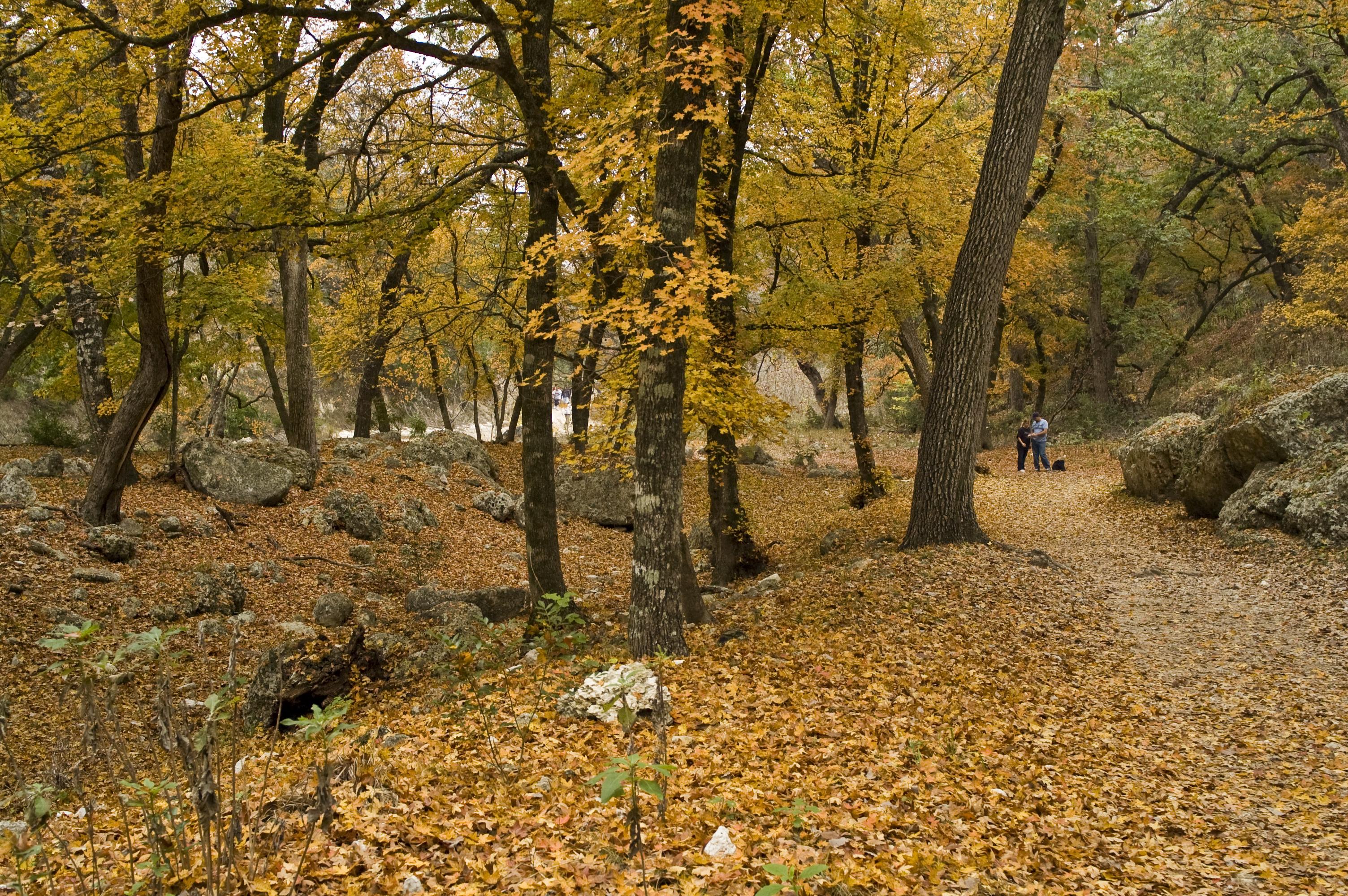 Resultado de imagem para Lost Maples State Natural Area