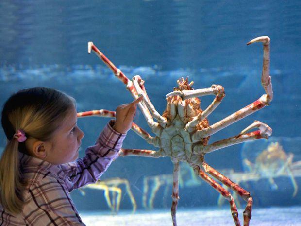 SEA LIFE Grapevine, TX Announces Claws Exhibit!