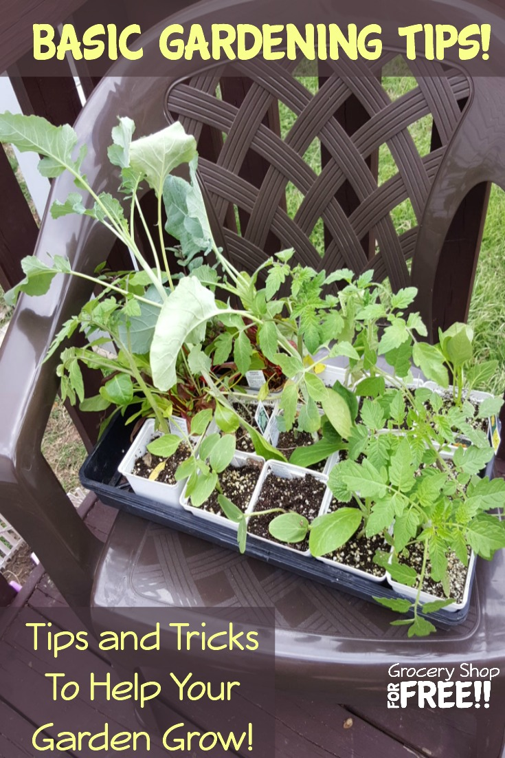 Are you a beginner gardener, starting a garden, want to know how to grow a garden, or plant a veggie garden, or need beginner gardening tips, this is for you!