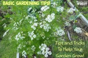 Basic Gardening Tips!