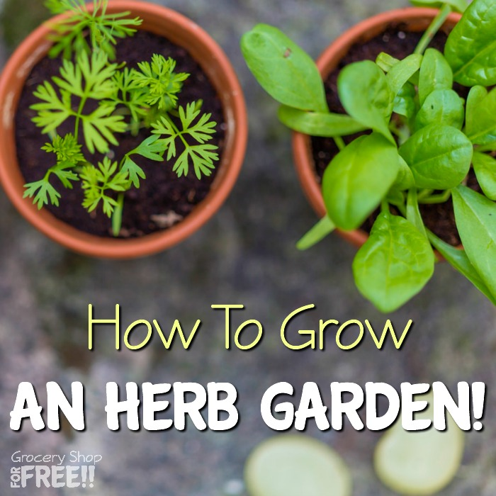 How To Grow An Herb Garden!  Growing Fresh Herbs Is Simple And Healthy!