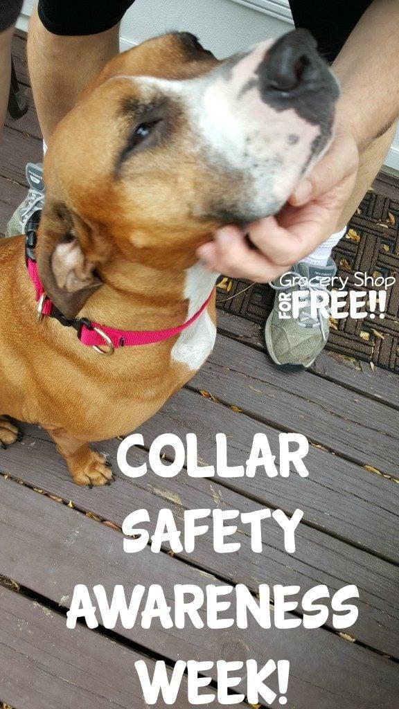 PetSafe® KeepSafe® Break-Away Collar!