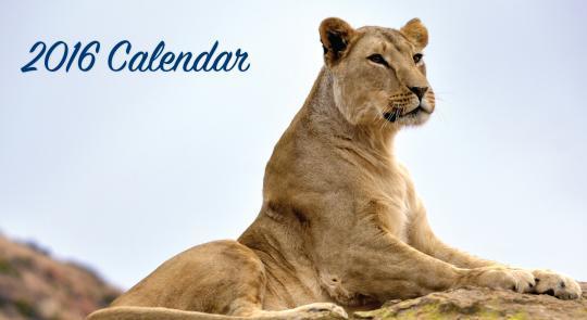FREE Four Paws 2016 Calendar!