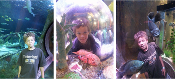 FREE Kid's Ticket To Sea Life With Purchase Of An Adult Ticket!  Dallas/Ft Worth