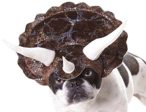 Animal Planet Triceratops Dog Costume $7.99! (Reg. $12.99!)