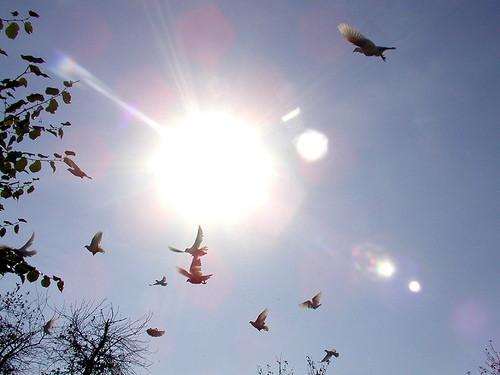 lucht met vogels