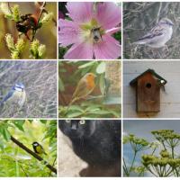 Jaarrond Tuintelling: tel mee voor het grootste tuinonderzoek van Nederland