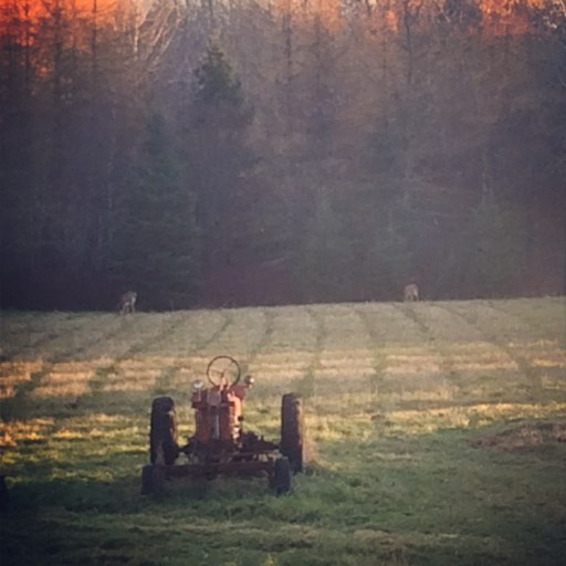 Now: Our Farmall H with Two Deer