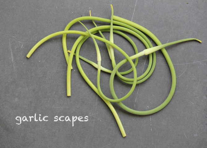SFC_garlic_scapes_labeled