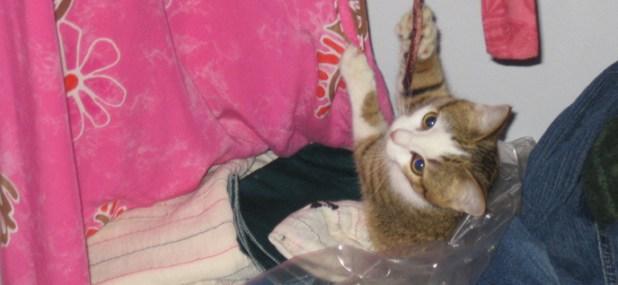 maintain cat closet
