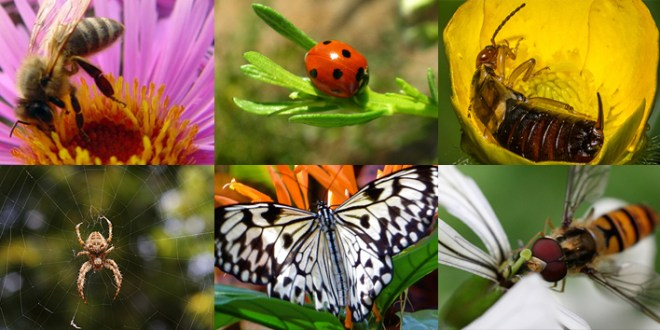 9 Beneficial Insects