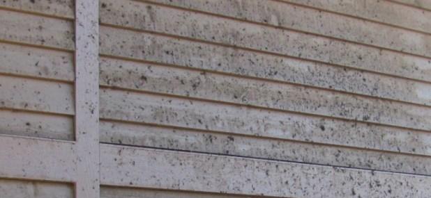 wood mold