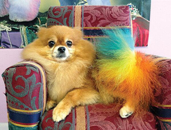 Cupcake rainbow tail dog