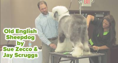 Old English Sheepdog by Sue Zecco & Jay Scruggs