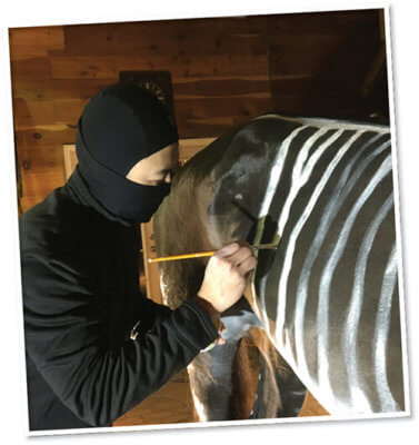 horse getting zebra stripes