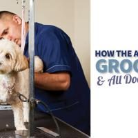 How the AKC Supports Groomers & All Dogs