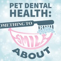 Pet Dental Health: Something to Smile About