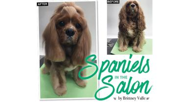 Spaniels in the Salon