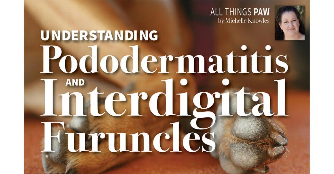 Understanding Pododermatitis and Interdigital Furuncles