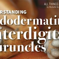 Understanding Pododermatitis and Interdigital Furuncles