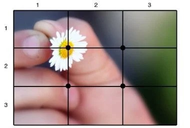 Photography Rule of thirds grid layout flower picture