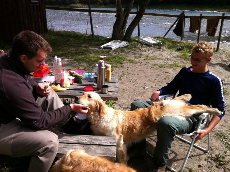 Två killar och hundar vid picknickbordet.