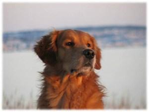 bild på hund