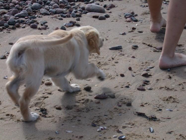en valp på sandstrand