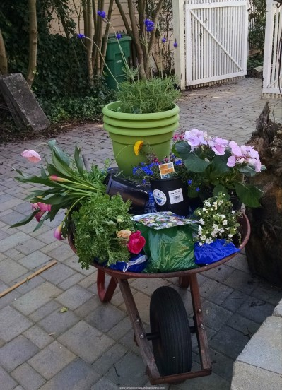 Wheelbarrow of delight 740x1024 Best Flowers To Plant In Spring