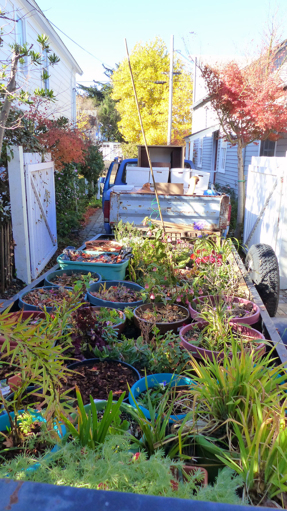 winter gardening in a cold and wet january
